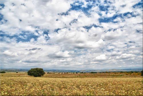 Campos de Villanueva de la Cañada