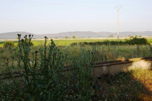 Campos de cultivos, acequias y cardos.