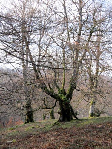 Selva de Irati, Valle de Salazar, Navarra, España.