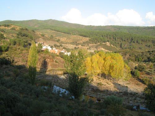 ARROLOBOS,CAMINOMORISCO-Los arboles con el amarillo otoñal (chopos).