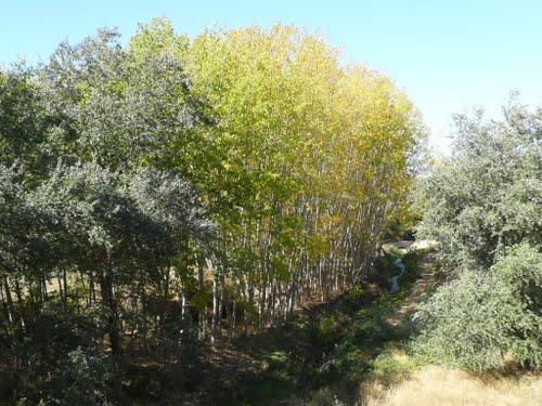 Diferentes colores en el arroyo del Alcazar
