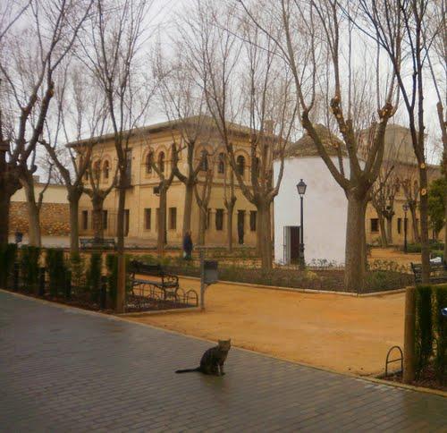 El Toboso,Aquí descubrió Don Quijote a las dulcineas( Mer53-Rebeca-Carmen T-Revoltosa-Marisol- Aggeliki.k- Lourdesa, Yolanda.
