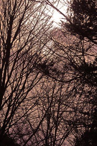 Los árboles no tienen hojas