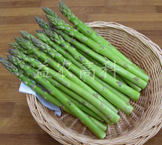 美国芦笋品种绿龙抗性强