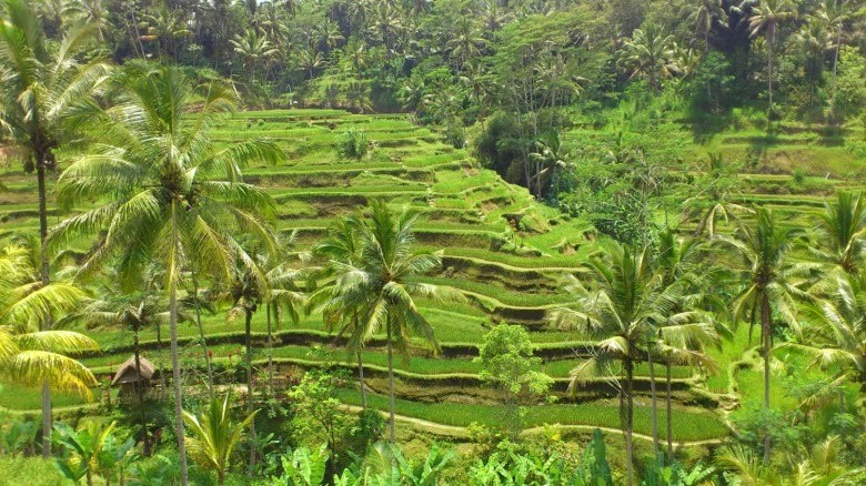 tegallarang的稻田