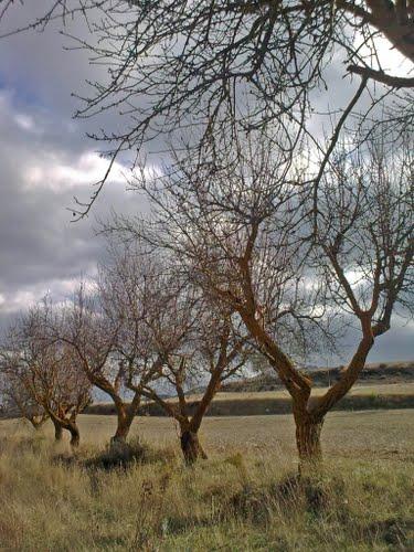 Cerca de Vélez Blanco