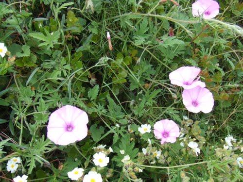 Primavera al Camí dels Montes