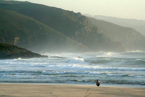 Lobo de mar con jersey a rayas