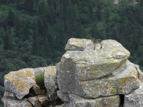 Detalle en la cima del Diente del Ahorcado ( Castrogran?de )  ( Sierra Carbonilla ) ( Burgos )