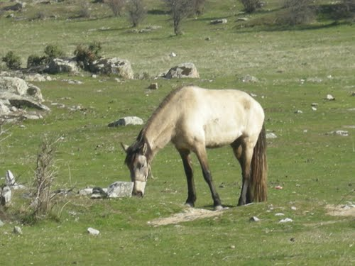 The horse eating