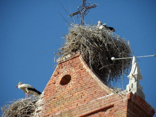 Cigüeñas en el campanario de Regueras.