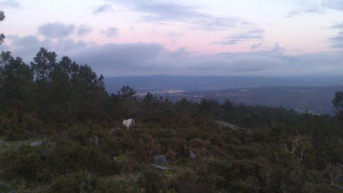 cabalos pastando no monte coa vista de A Estrada