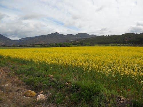 Campos amarillos con el Prepirineo al fondo , Huesca.