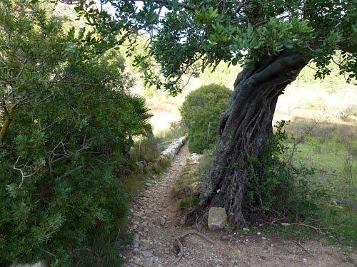 Camino de Can Farineta