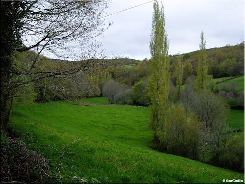 Camino de Santiago. Etapa: Triacastela-Sarria. Prados en la subida a San Xil