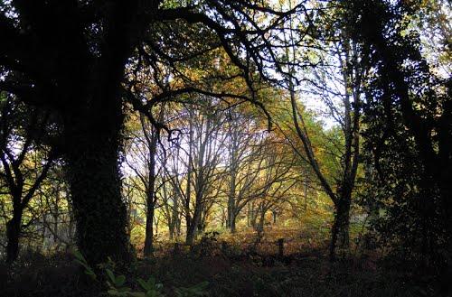 Outono. Vía de la Plata 2011