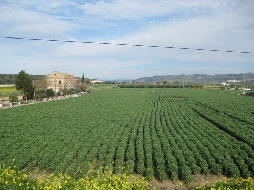 Campos de cultivo cerca de Bobadilla. Abril de 2013