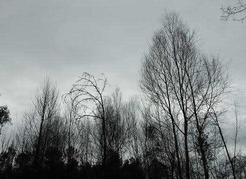 Bosque invernal en Pasarelos