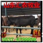 中国大的肉驴养殖厂
