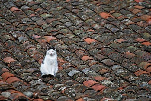 A gata sobre o tallado de tella