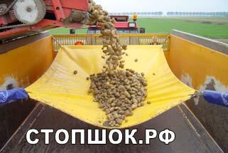 Бережная уборка картофеля, лука, свеклы, овощей – система СТОПШОК.