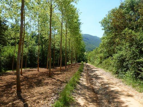 Camino de Berganzo