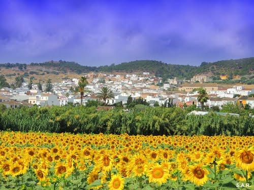 <Vista de Bornos> Bornos (Cádiz)