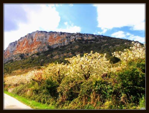 Hozabejas - Floración cerezos 2014