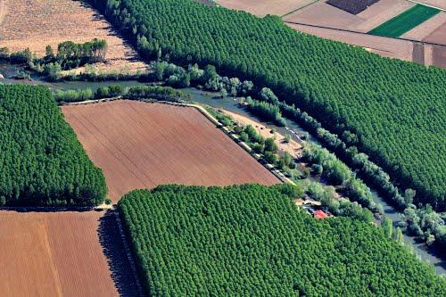 Vista aérea de unas arboledas en el río Orbigo