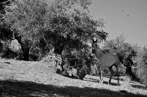 Cavallo al Sabariego, par @L1