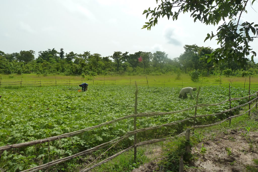Inland vallley agriculture in Benin