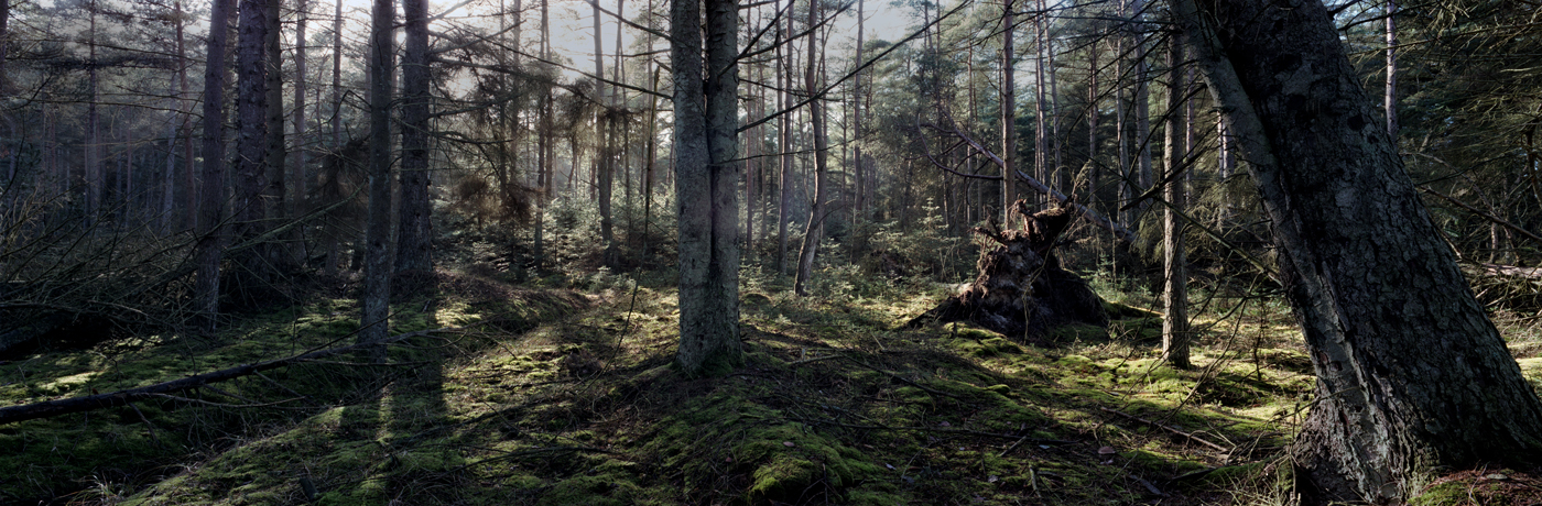 THE-PATHLESS-WOODS