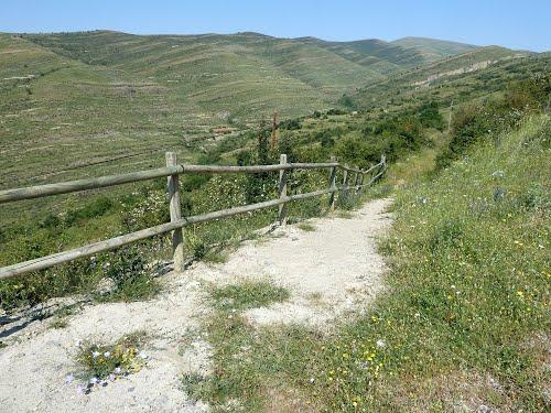 HORNILLOS DE CAMEROS (La Rioja). 2013. 206. Camino del yacimiento de La Pellejera.
