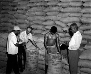 Borlaug and wheat seed in India