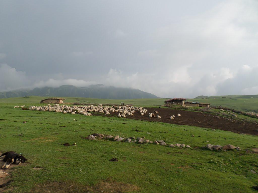 Korakh meadow