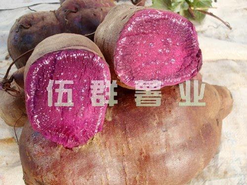 紫薯王+紫薯苗