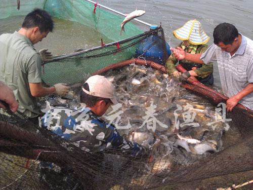 充气式捕捞|捕捞技术转让|捕捞网