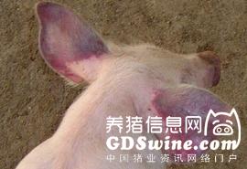 2016年上半年度全国猪蓝耳病数据出炉