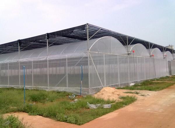 圆拱型连栋温室大棚建设