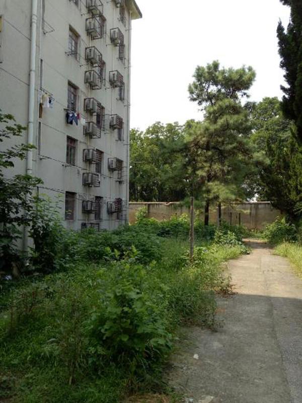林琳(化名)所在的宿舍楼。