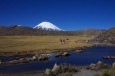 TRIP 02: SAJAMA NATIONAL PARK (21 Days)