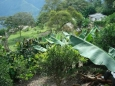 DSE 06: TROPICAL NORTH YUNGAS � COROICO VILLAGE (2 Days)