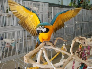 Learn How to Care for a Pet Bird