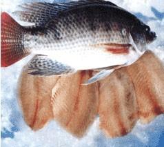 海南宏达罗非鱼肉