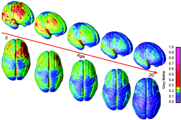 Dynamic mapping of human cortical development during childhood through early adulthood