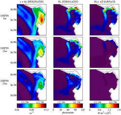 CLICK HERE: Dynamic Modeling of Marine Bioluminescence and Night Time Leaving Radiance