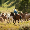 Moving horses at the 320 Guest Ranch near Big Sky