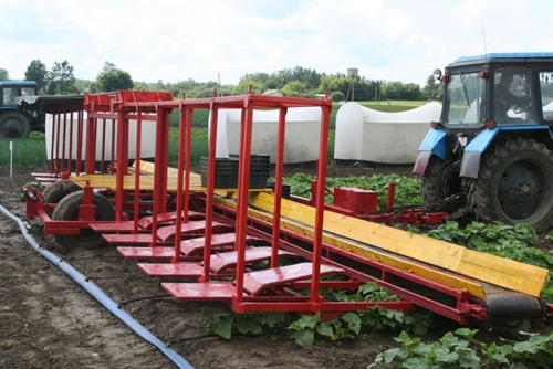 Cucumber Harvesting Machine in Russia
