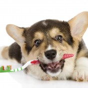 Dental Care Is Critical For Today's Pets