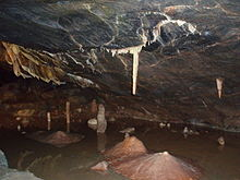 Dark brown cave interior with water. A white vertically hanging stalagmite shown above a brown mound on the cave floor